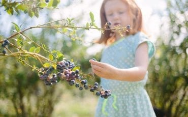 Best Blueberry Farms Around Atlanta