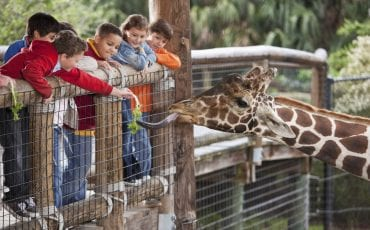 Best Zoos, Wildlife Parks and Petting Zoos Around Atlanta