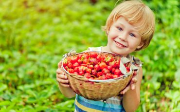 10+ Top Farms for Strawberry Picking Near Atlanta